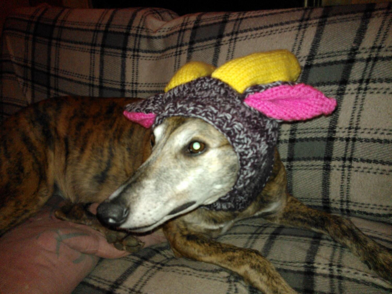 Greyhound Reindeer Hat knitting pattern FREE UK Postage from ...