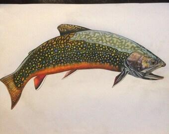 "Colored Pencil full body Brook Trout ORIGINAL 13.5x17 """