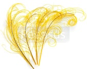 GOLDEN YELLOW peacock feather sprigs (6-8 Inches)(3 packages) plumes for hats,fascinators,costume headdress,brooch bouquet