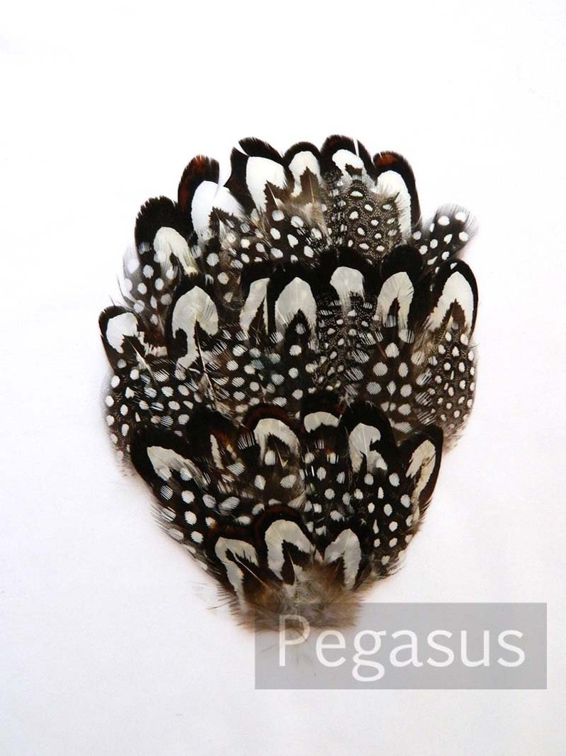 costumes headbands and hairclips hats Black and White Reeves Feather Pad masks for millinery headdresses pheasant feather