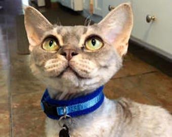 Fleece Padded Cat Collars - moggy / Sphynx / Peterbald / Devon Rex etc / safety collar