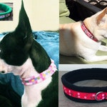 NARROW width Padded Prints DOG Collars - for small dogs / puppies (made to measure)