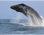 2021 Whales of Guerrero C...