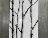 Winter Aspen Fused Glass Wall Art