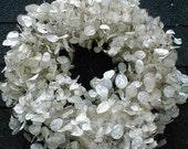 MONEY PLANT Wreath 2021 Lunaria Honesty Free Priority Shipping