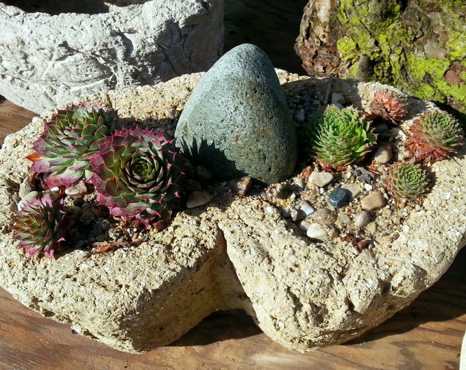 Hypertufa Planter | Rough & Rustic | Carved Lightweight Concrete Planter | Kidney Shaped Outdoor Succulent Planter | Limestone Color