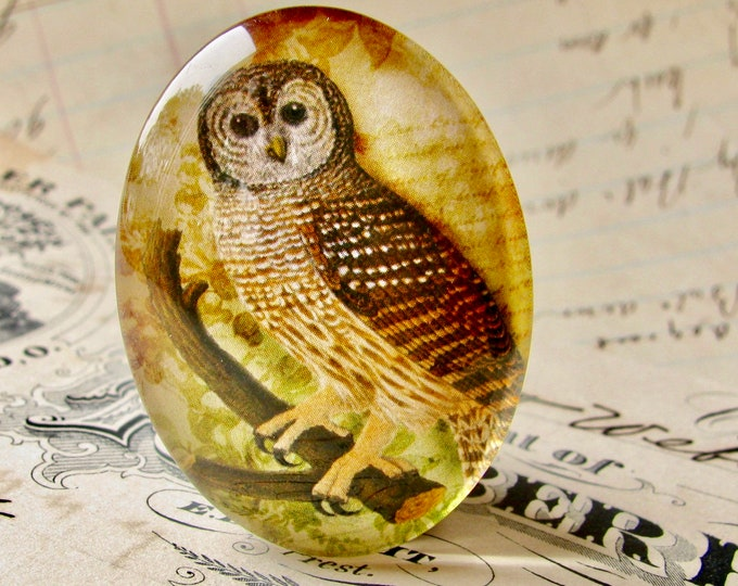 Woodland Owl, Tawny Owl, Barn Owl, 40x30mm glass oval cabochon, brown, wisdom bird, handmade in this shop, Bird Illustration collection