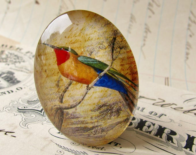Exotic bird, from our Beautiful Birds collection of handmade glass cabochons, 40x30mm oval cabochon, tropical bird, handmade in this shop