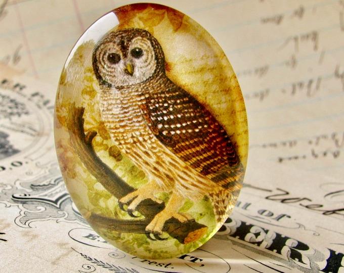 Woodland Owl, Tawny Owl, Barn Owl, 40x30mm glass oval cabochon, brown, wisdom bird, handmade in this shop, Bird Illustration collection