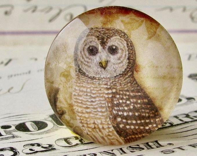 Woodland Owl, Tawny Owl, Barn Owl, 25mm round glass cabochon, brown, wisdom bird, handmade in this shop, Bird Illustration collection
