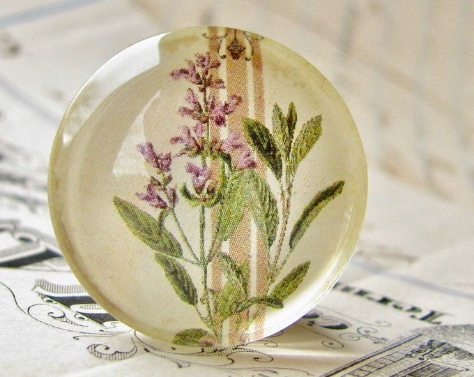 Flowering Sage, herbs from our Vintage Kitchen collection of handmade glass oval cabochons, 25mm circle, food, cooking, bottle cap 1 inch