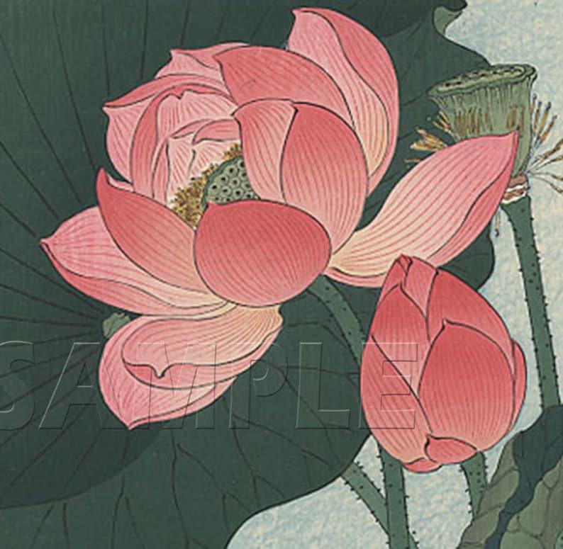Flowering Lotus Beautiful Vintage Art Reproduction Etsy