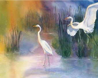 Great White Egrets on Lotus Lake