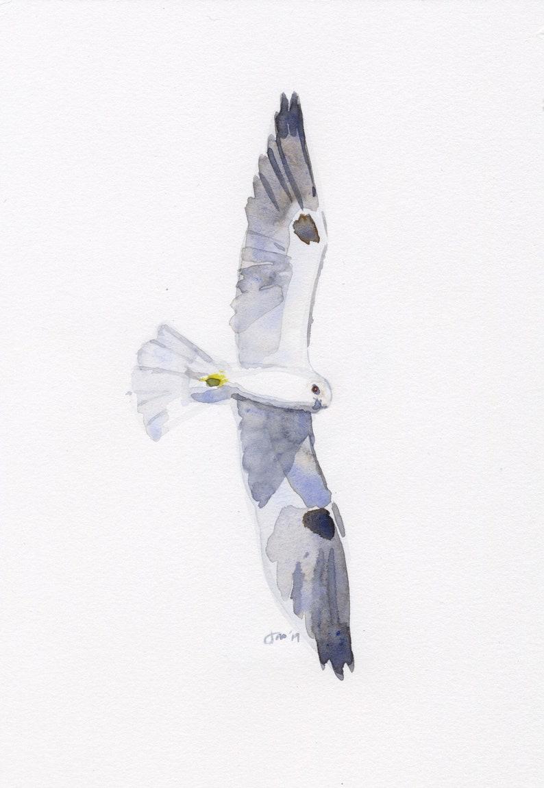 ORIGINAL White-tailed Kite  Watercolor image 0