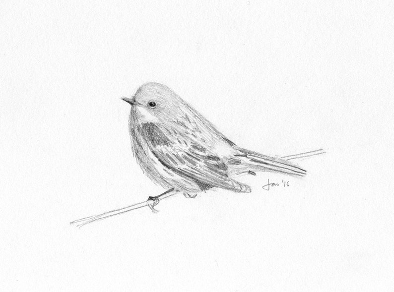ORIGINAL Yellow-rumped Warbler  Sketch image 0