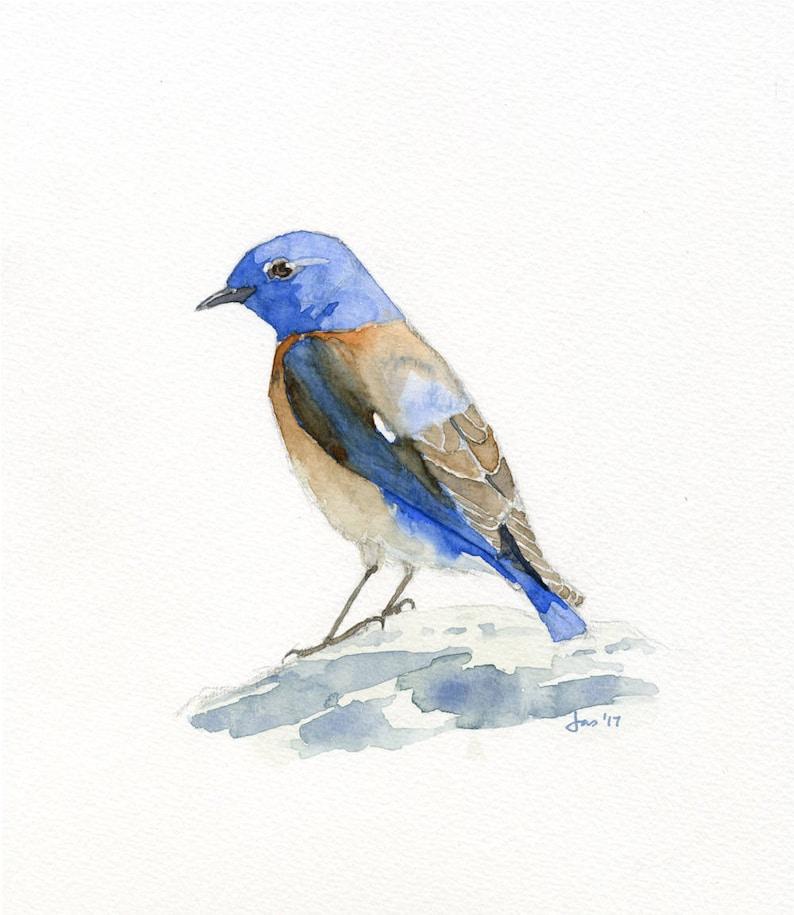 ORIGINAL Male Western Bluebird  Watercolor image 0