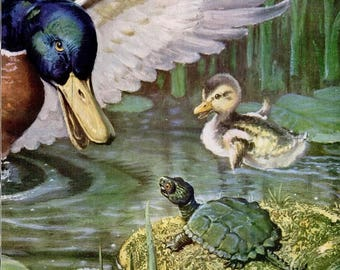 1948 Chrysler Corporation Mallard Duck Two Page Poster Magazine Spread Ad Vintage Duckling Wildlife Pond Turtle Nature Illustration Wall Art