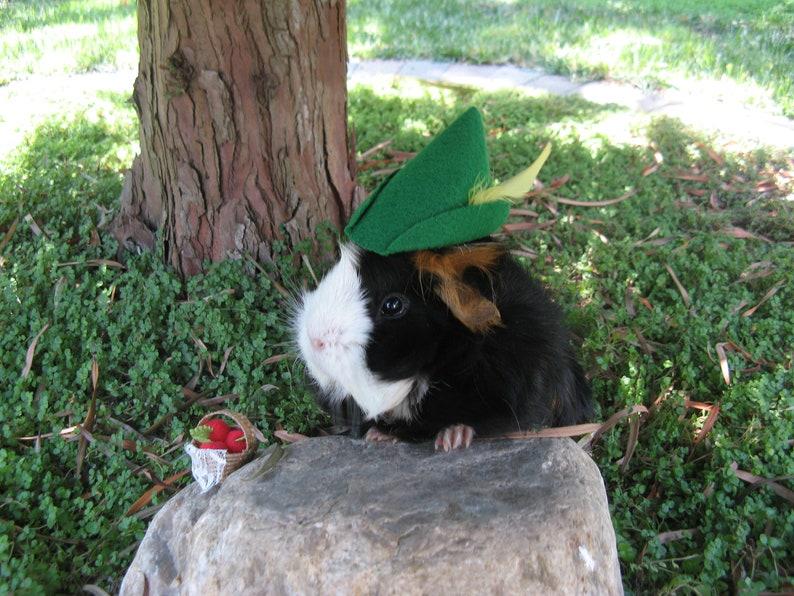 Cavia cappello Guinea Pig Robin Hood Hat Guinea maiale  85cc2f6cc24d