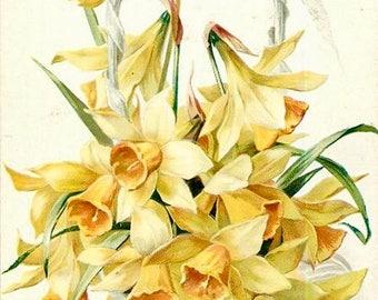 Vintage Easter Yellow Daffodils Graphic Image Art Fabric Block Doodaba