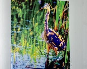 "Enhanced Great Blue Heron 20""x28"" Photo Canvas"