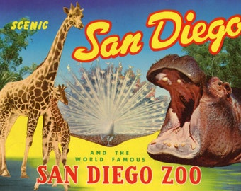 SALE! Scenic San Diego and the World Famous San Diego Zoo - 1962 city guide