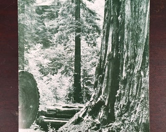Vintage Booklet - Story Told by a Fallen Redwood - Save the Redwoods