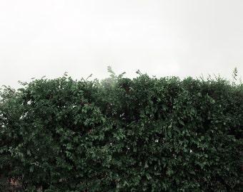 The Wild Hedge Modern Landscape New York