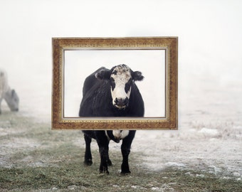 Black and White Cow in a Gold Picture Frame