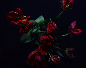 Dark Botanical Dark Floral Red Tulips in the Dutch Style Dark Floral Photography