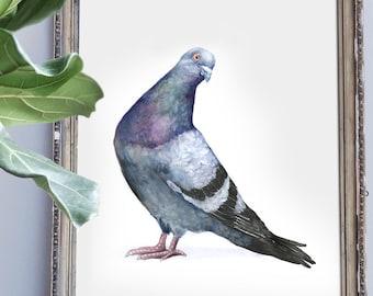 Sassy Pigeon Watercolor Print, Watercolor Bird Print