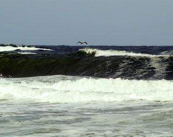 Pelican Sighting- fine art print- fine art photography, ocean photography, pelican photography, seascape, wall art, home decor, office decor