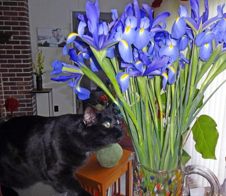 M or S Tote Bag Francis Loves Flowers Original Art Black Cat L Printed on Both Sides!
