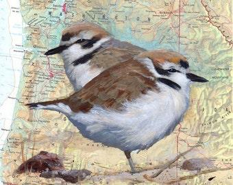 Giclee Fine Art Print - Snowy Plover -Map of Pacific Coast Oregon Washington - Endangered Species