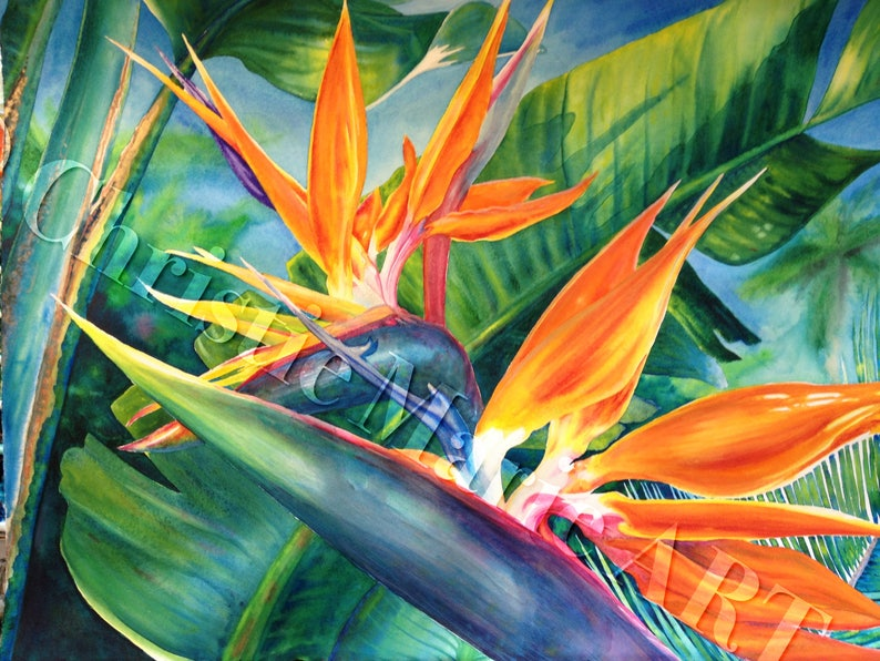 ORIGINAL Large Framed Hawaiian Bird of Paradise Watercolor Art image 0