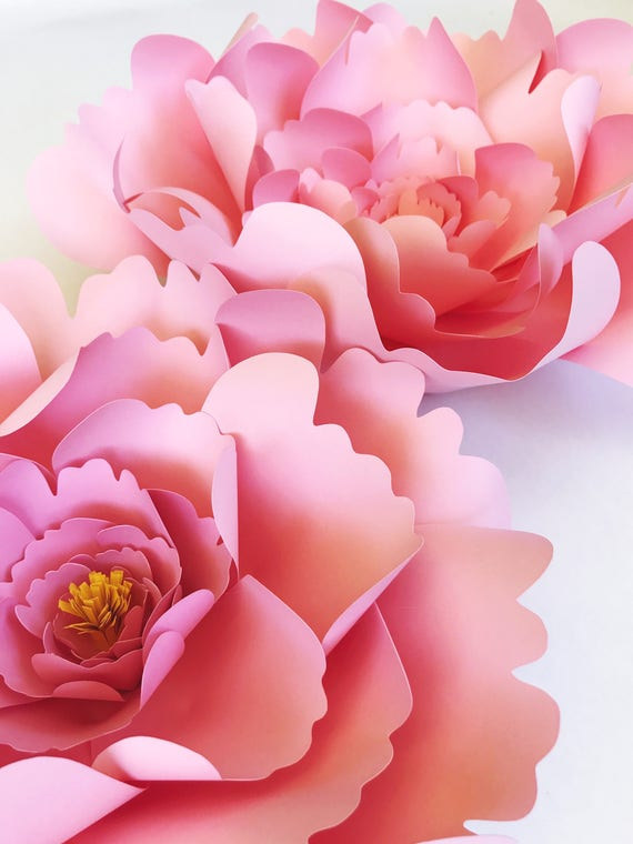Large Peony Paper Flower Template Diy Instant Download Etsy