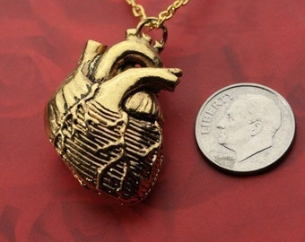 Anatomical Heart in 24k Gold Plate, on a Gold Plated Chain (Original Design, Made in NYC)