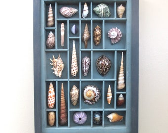Seashell assemblage, mixed media art, collage, painted sculptures, collection of seashells that are composed within a printers type box.