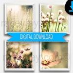 Printable Flower Photos Set 4 Prints 12x12 Digital Download Pastel Flower Photography 4 Photo Set