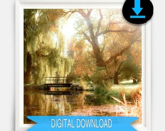 Printable Fine Art, Willow Tree Print, Nature Photography, Rustic Wall Art, Green, Gold, Digital Download, Ottawa, Botanic Gardens
