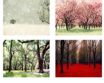 4 Seasons Wall Art - Nature Photography Canvas Wall Art - Four Seasons Art - 4 Seasons Tree - Four Seasons Wall Art