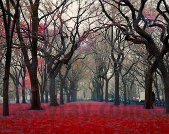 Central Park New York Print, Nature Photography, Red, Black, Gray, Vertical, Large Wall Art, Fall