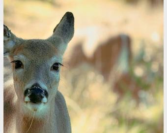 Deer Photo, Woodland Nursery Art, Nature Photography, Baby Deer Print, Brown, Beige, Neutral, Green