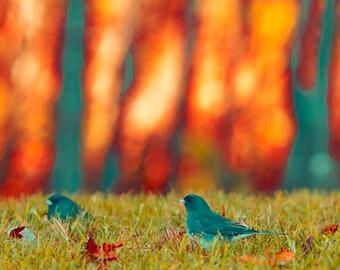 Nature photography Bird Print Orange Gray Green Rustic Wall Decor Fall Decor