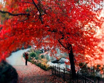 Red Tree Print in Central Park Nature Photography, New York Print, Large Wall Art Red Black