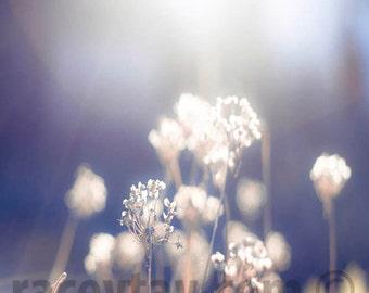 Nature Photography, Purple Decor, White, Flower Photograph, Blue, Beige, Purple, Neutral
