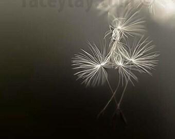 Dandelion Print, Flower Photography, Black, Beige, Girl Nursery Decor, Dreamy, Dandelion Wall Art, Faith Manages