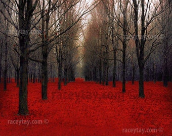 """Red Forest Print Fall Nature Photography Rustic Wall Decor in Black & Red Large Wall Art """"Fiery Autumn"""""""