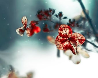 Flower Photography, Teal, Blue, Red, Hydrangea, Surreal, Dreamy, Romantic Wall Decor