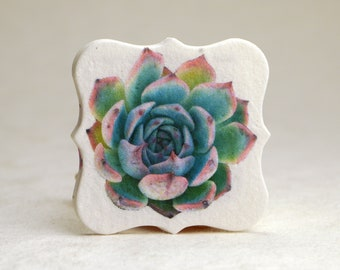 """Succulent Watercolor Art 