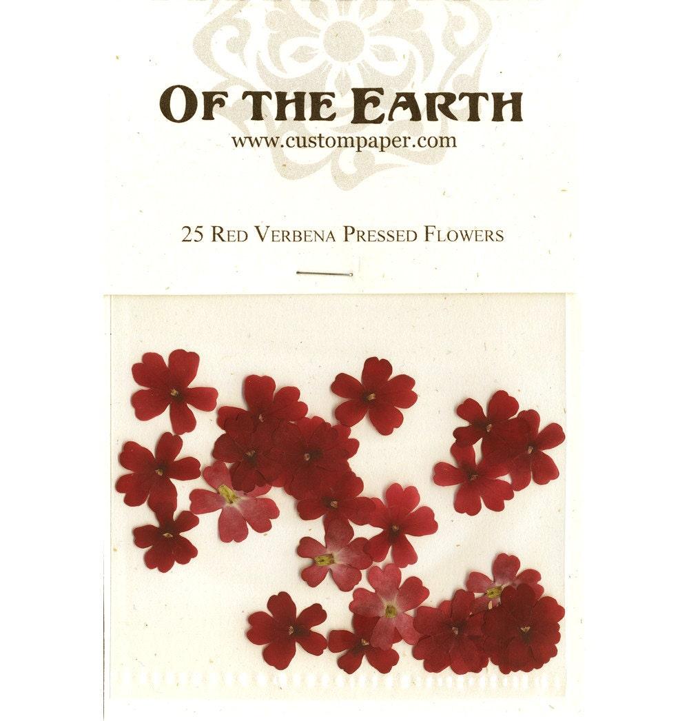 Red Verbena Pressed Flowers Pack Of 25 12 Inch Diameter Etsy